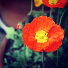 #flowers #spring # - @elf_rainyday   Webstagram