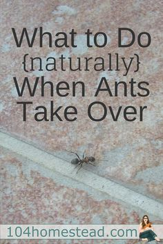 I really, really don't like ants. That being said, as a lover of bees and other beneficial insects, I am always incredibly reluctant to use pesticides.