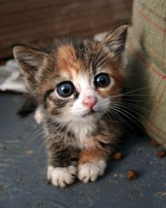 Why dont they have minature cats? If they could  only stay this tiny and cute
