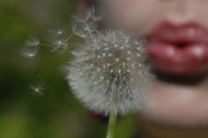 Dandelion wishes!