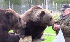 Sulo Karjalainen, a Finnish man, makes playing with bears seem like a walk in the park. He approaches them, feeds them, and even shares meals with them. Ancient Egyptian Art, Ancient Aliens, Ancient Greece, European History, American History, Anglo Saxon, Ancient Artifacts, Roman Empire, Middle Ages