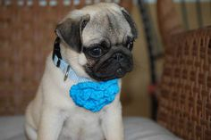 Amanda, I wanted to attach a picture of George Boomer in his new collar. We brought him home in the baby boy blue collar. Isn't he so cute? We will be adding to his mimi green collection. Thank you,    Amy Waldron and George Boomer -- Yuma, Arizona