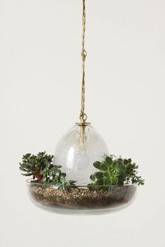 "Terrarium Pendant Lamp, from Anthropologie.com, is part planter, part grow-light. Handblown glass creates a self-sunning, almost-no-water-required microcosm of tropicals, epiphytes, fresh herbs or succulents in the included growing medium.  Handmade in CA by Carmen Salazar.  $499.  12"" h, 12"" dia.  40 watt max, plug-in cord.  Plants not included."