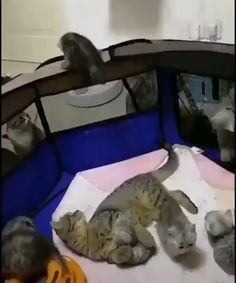 funny cats and dogs . funny cats can't stop laughing . funny cats and dogs videos . funny cats with captions Cute Cat Gif, Cute Funny Animals, Cute Baby Animals, Funny Cats, Funny Cat Memes, Pet Memes, Memes Humor, Funny Humor, Cute Cats And Kittens