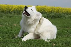 Gdy pies ciągle się drapie:  http://www.kakadu.pl/Zdrowie-psow/gdy-pies-cigle-si-drapie.html