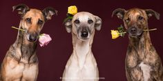 Thanks, everybody, for all the lovely comments and the support. All my pictures here can be licensed and bought as prints. Just send me a message via info@elkevogelsang.com
