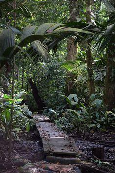 Tortuga Lodge, Tortuguero, Costa Rica