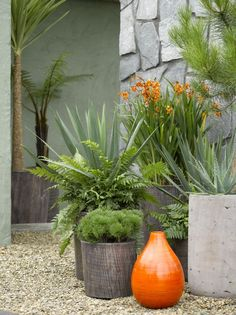 Great contrast with the orange, grey, and green!