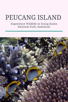Experience Indonesia's wildlife in Peucang Island, Ujung Kulon National Park. Off the beaten path island in Indonesia