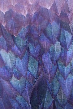 Feathers | http://dishfunctionaldesigns.blogspot.com/2012/01/color-palette-deep-purple-blackberry.html#