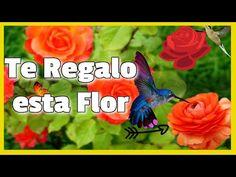 Te Regalo Esta Flor - Poema Te Regalo esta Flor - Un Poema de Amor - Frases para mujeres