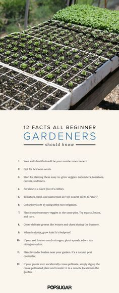Cucumbers, tomatoes, carrots, and beets are the easiest veggies to grow first. Many insects (excluding bees) and deer detest the scent of lavender. Plant it around your garden as a natural pest repellent