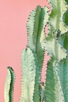 Instagram anbefaling Plants on pink