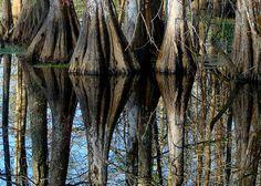 Lake Martin Cypress Swamp, Lafayette Louisiana