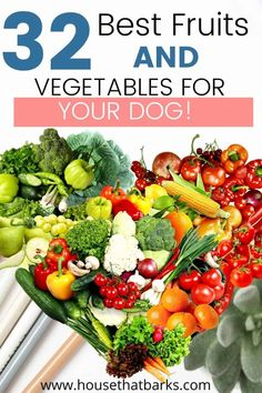 Have you ever wondered which fruits and vegetables were healthy for dogs? Here is a list of fruits or veggies for dogs. Toxic Foods For Dogs, Foods Dogs Can Eat, Fruits For Dogs, Healthy Vegetables, Fruits And Vegetables, Veggies, Homemade Dog Cookies, Homemade Dog Food, Veggie Recipes