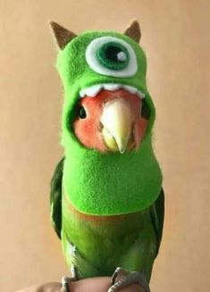 Funny images pictures cute animals ideas for 2019 Funny Birds, Cute Birds, Cute Little Animals, Cute Funny Animals, Funny Parrots, Budgies, Cockatiel, Funny Animal Pictures, Funny Images