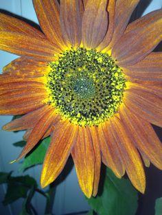 Höst Plants, Flora, Plant, Planting