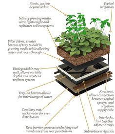 """Garden Ideas for planting edible  ornamental plants in 3"""" of soil pinned by @dakwaarde"""