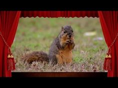 Obrazovo-zvukové video hádanky pre deti – zieratká | www.familyzone.sk Nursery, Education, Youtube, Animals, Animales, Animaux, Baby Room, Animal, Child Room