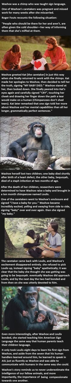 Never Underestimate The Intelligence Of Animals