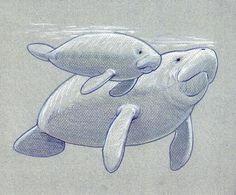 draw a manatee - Google Search