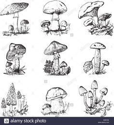 Mushroom Set Hand Drawn Engraved Vintage Stock Vector 768201115 in vintage mushroom drawing collection - ClipartXtras Mushroom Drawing, Mushroom Art, Doodle Drawings, Drawing Sketches, Botanical Illustration, Illustration Art, Mushroom Tattoos, Arte Sketchbook, Arte Horror