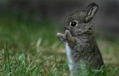 cute bunny rabbit!