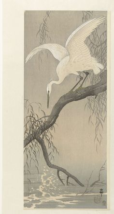 Witte reiger op boomtak, Ohara Koson, 1900 - 1910
