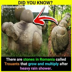 Interesting Facts About World, Amazing Facts, Crazy Facts, Weird Facts, Friendship Memes, Exams Funny, Psychology Fun Facts, Did You Know Facts, Shocking Facts