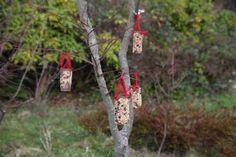 After Christmas presents are opened, go and make a tree for the birds.