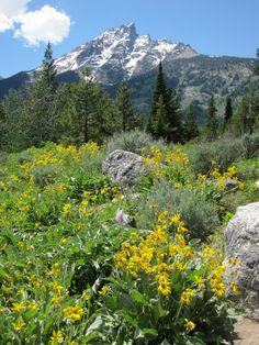 Wyoming, USA, with its mountains and wildflowers, is a great destination for the outdoorsy: #vacation #nature #adventure Visit transatlantic.travel or contact Eileen Schlichting to learn more!