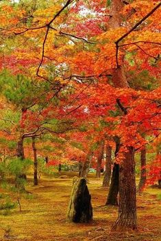 I'm so glad I live in a world where there are Octobers. Autumn Scenery, Autumn Nature, Autumn Trees, Autumn Girl, Beautiful Nature Pictures, Amazing Nature, Autumn Lights, Fall Pictures, Tree Forest