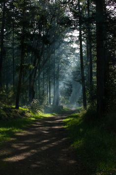 Nature Forest Wood Scenery 51 Ideas For 2019 Forest Photography, Landscape Photography, Photography Tips, Ocean Photography, Beautiful Places, Beautiful Pictures, Beautiful Forest, Magical Forest, Dark Forest