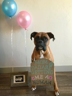 How I announced my pregnancy #pregnancyannouncement #dogs #babies #cute