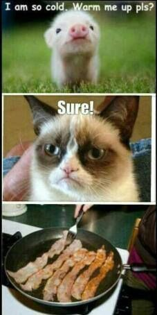 Grumpy Cat loves pigs . . . well, bacon. She loves bacon. This ones for you @Kelsie Criblez