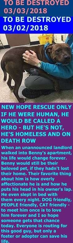 SAFE 3-3-2018 by Amsterdog Rescue --- Hello, my name is Benny. My animal id is #21051. I am a desexed male chocolate dog at the Manhattan Center. The shelter thinks I am about 4 years 1 weeks old.  I came into as a owner surrender on 18-Feb-2018, with the surrender reason stated as person circumstance- homeless.  http://nycdogs.urgentpodr.org/benny-21051/