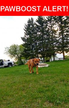 Please spread the word! Oakley was last seen in Mundare, AB T0B 3H0.    Nearest Address: Alberta 16, Mundare, AB, Canada