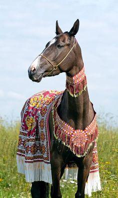 Нажми чтоб закрыть. Akhal Teke Horse with ornate blanket and collars.