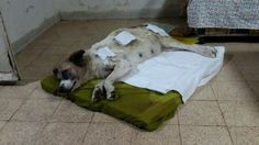 Petition · Stop the Municipalities of Bethlehem from poisoning and shooting innocent dogs and cats. · Change.org