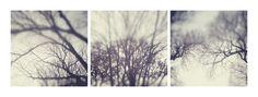 // As árvores unidas jamais serão vencidas  [The trees united will never be defeated]  // Composition (22 January 2012) // Lisbon, Portugal // 16 January 2012  // 50x50cm x3 // Inkjet print (Epson UltraChrome K3 pigmented ink on Hahnemuhle Photo Rag paper) // Edition of 3 + 1AP    // José De Almeida photography  // http://www.josedealmeida.com/