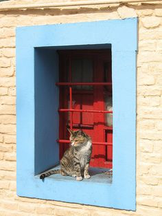Tabby Cat sitting in a window, blue outer frame, red inner shutter, outside, in El Caminito, La Boca.