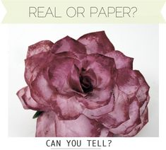Amazing roses from coffee filters, with video from Martha Stewart Show.  These look real!