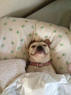 28 Dogs That Know Exactly How You Feel This Morning