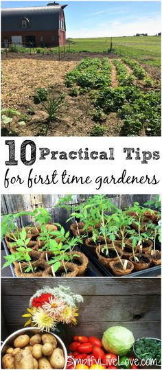 If you want to start your first garden but aren't sure where to start, these tips for first time gardeners will be a big help. Growing a garden can be very rewarding, but there are a few things you should consider before you start. diy garden tips Organic Vegetables, Growing Vegetables, Hydroponic Gardening, Container Gardening, Vegetable Gardening, Flower Gardening, Flowers Garden, Beginner Vegetable Garden, Veggie Gardens