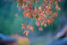 秋雨に流れて
