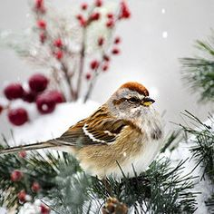 - Holiday Tree Sparrow Square  by Christina Rollo