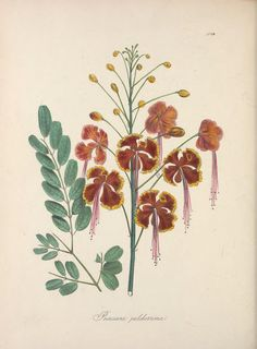 v.2 (1838) - The floral cabinet and magazine of exotic botany / - Biodiversity Heritage Library