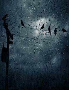 I rainy days l Walking In The Rain, Singing In The Rain, Rainy Night, Rainy Days, Night Rain, I Love Rain, Rain Go Away, Rain Photography, Rain Storm