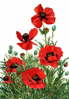 A set of four assorted note cards of watercolor reproductions. This set features red poppies. Each comes with an envelope.