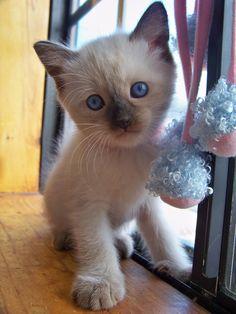 StormHaven kitten